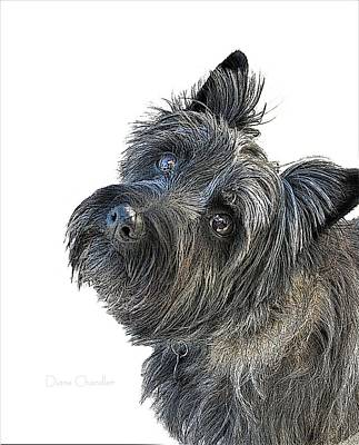 Digital Art - Please Can I Have A Treat by Diane Chandler