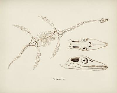 Guns Arms And Weapons - Plesiosaurus illustrated by Charles Dessalines D Orbigny  1806-1876 2 by Celestial Images