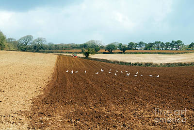 Photograph - Ploughing   by Terri Waters