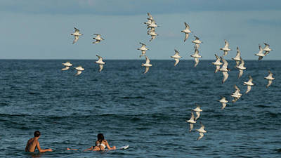 Photograph - Plover Surfers Delray Beach Florida by Lawrence S Richardson Jr