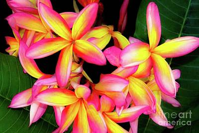 Photograph - Plumeria Flowers - Tropic Hawaii by D Davila