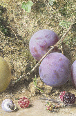 Painting - Plums And Mulberries Detail by William Henry Hunt