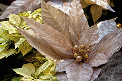 Photograph - Poinsettia Winter Decoration by Tatiana Travelways