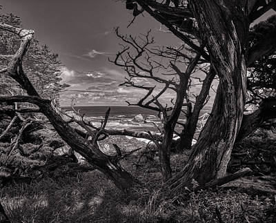 Bringing The Outdoors In - Point Lobos 223 by Mike Penney