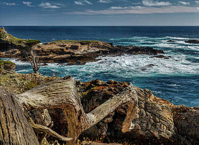 Target Threshold Nature - Point Lobos 293 by Mike Penney
