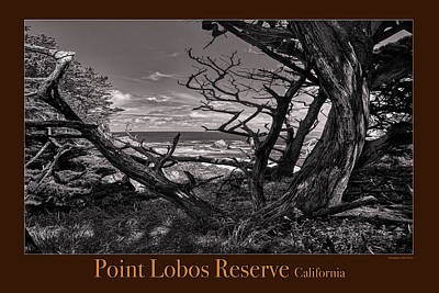 Caravaggio - Point Lobos Poster 3 by Mike Penney