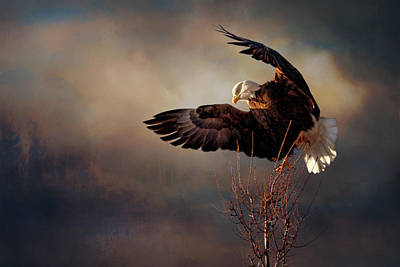 Photograph - Poised For Flight by Susan Rissi Tregoning