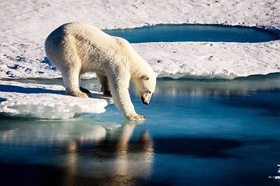 Painting - Polar Bear At The Arctic. Original From Nasa by Celestial Images