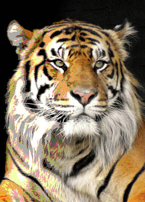 Photograph - Polarized Bengal Tiger  by Doc Braham