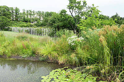 Photograph - Pond And Wetland Flora At Brooklyn Botanic Garden by Dawn Cavalieri
