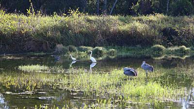 Photograph - Pond Birds Paradise by Carol Groenen