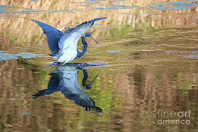 Photograph - Pond Reflecting Heron by Carol Groenen