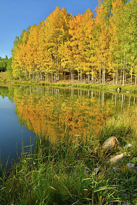 Photograph - Pond Reflection Of Aspens In Full Color by Ray Mathis