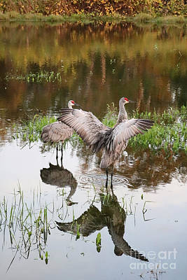 Photograph - Pond Visitors by Carol Groenen
