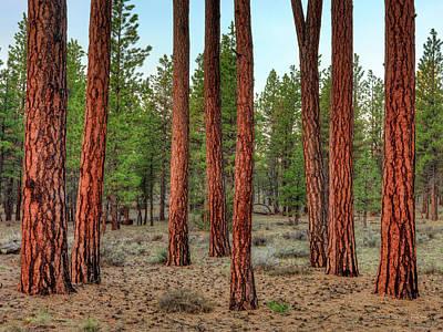 Photograph - Ponderosa Pine Textures by Leland D Howard