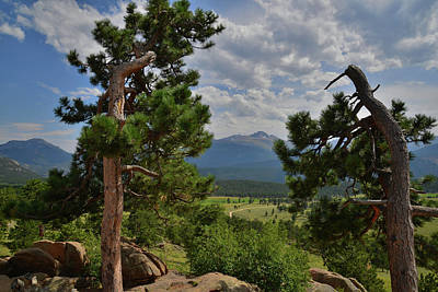 Photograph - Ponderosa Pines Frame Longs Peak by Ray Mathis