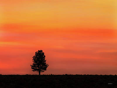 Photograph - Ponderosa Silhouette by Leland D Howard