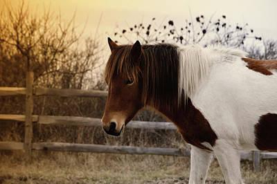 Photograph - Pony Warm Up by Jason Fink