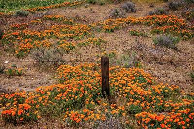 Photograph - Poppies And A Fence Post by Lynn Bauer
