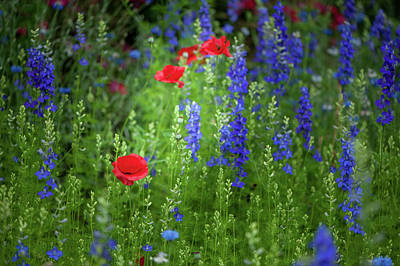 Photograph - Poppies And Wildflowers by Mark Duehmig