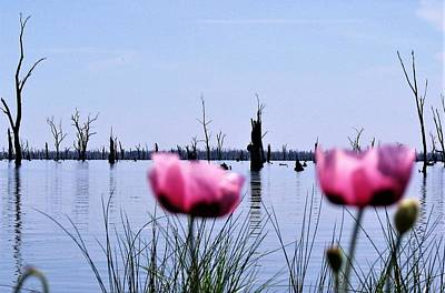 Flower Wall Art - Photograph - Poppies On Lake Mulwala  by Joan Stratton