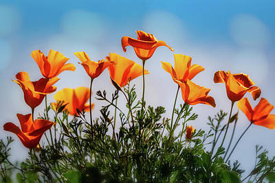 Photograph - Poppies To The Sky  by Saija Lehtonen