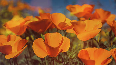 Photograph - Poppies Up Close  by Saija Lehtonen