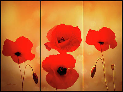 Digital Art - Poppy Dance by Valerie Anne Kelly