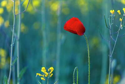 Photograph - Poppy by Evgeni Dinev
