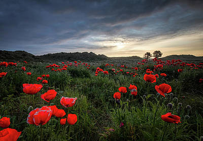 Photograph - Poppy Field by Victoria Redpath