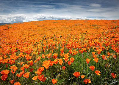 Photograph - Poppy Fields Forever by Endre Balogh