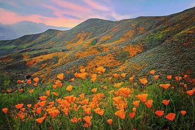 Photograph - Poppy Sunrise In Walker Canyon by Lynn Bauer