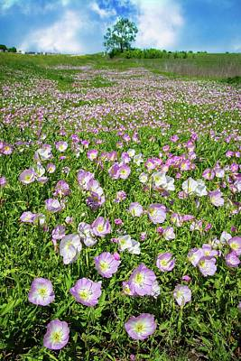 Photograph - Pops Of Pink Primrose by Lynn Bauer