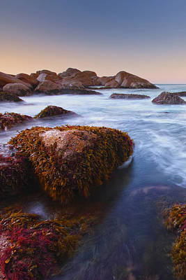 Photograph - Port Elliot Weeds by Edmund Khoo Photography