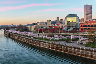 Photograph - Portland Pink by Wes and Dotty Weber