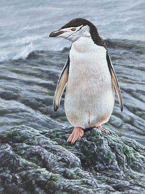 Painting - Portrait Of A Chinstrap Penguin By Alan M Hunt by Alan M Hunt
