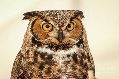 Photograph - Portrait Of A Great Horned Owl by Sheila Skogen