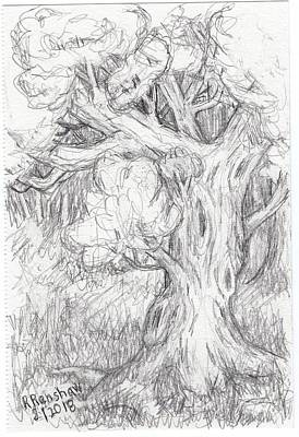 Drawing - Portrait Of A Tree by Ruth Renshaw