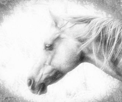 Photograph - Portrait Of A Wild Horse by Gerlinde Keating - Galleria GK Keating Associates Inc