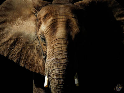 Photograph - Portrait Of An African Elephant by Elie Wolf