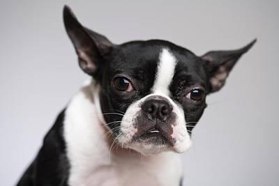 Portrait Of Dog Art Print by Jupiterimages