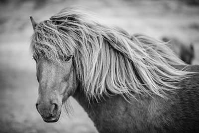 Photograph - Portrait Of Icelandic Horse In Black And White by Gigi Ebert