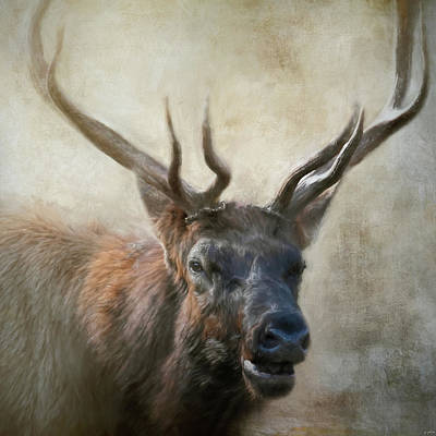 Painting - Portrait Of The Bull Elk by Jai Johnson