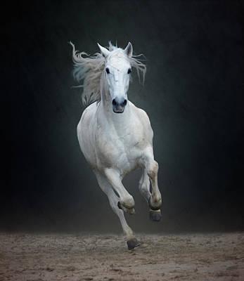 Photograph - Portuguese White Lusitano Horse by Christiana Stawski