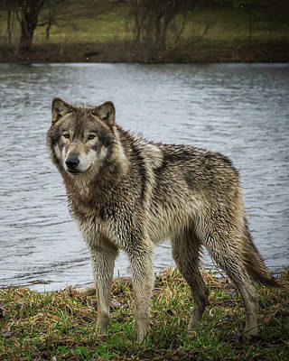 Photograph - Posing By The Water by Laura Hedien