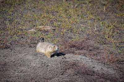 Mountain Landscape Royalty Free Images - Prairie Dog 1 Royalty-Free Image by Jim Thompson