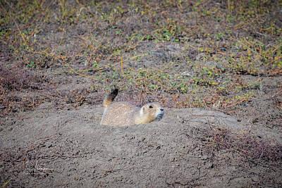 Photograph - Prairie Dog by Jim Thompson