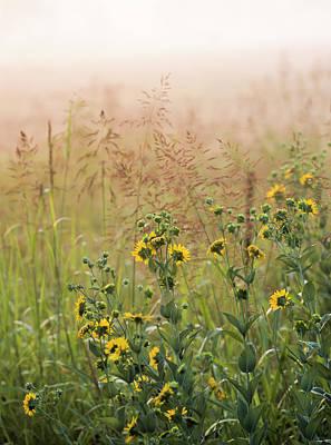 Photograph - Prairie Fog by Robert Potts