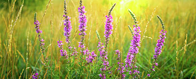 Royalty-Free and Rights-Managed Images - Prairie Liatris by Steve Gadomski