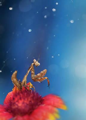 Photograph - Praying Mantis In Rain by Twomeows